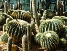 Free Cactus Stock Image - 15194401