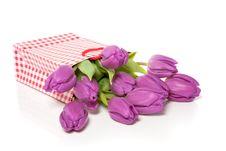 Free Purple Tulips Royalty Free Stock Photo - 15194945