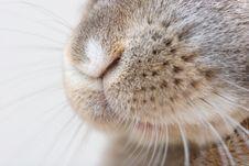Free Rabbit Nose Stock Image - 15196791