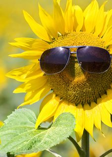 Free Summer Stock Photography - 15197212