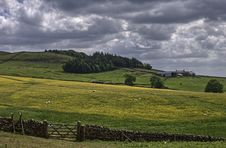 Northumbrian Farm