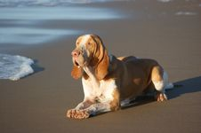 Free Eager Dog Royalty Free Stock Photography - 15198437