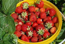 Free Strawberries Stock Photos - 15198493