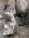 Free Rhino Stock Images - 1524294