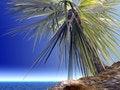 Free Single Palm Royalty Free Stock Image - 1528926
