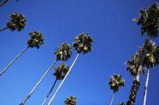 Free Palm Trees Royalty Free Stock Photo - 1520145