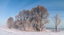 Frosty Day. Royalty Free Stock Photos
