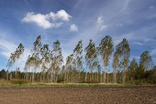Free Trees In The Wind Stock Image - 1521341