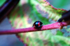 Walking Ladybug Along Stem Stock Photo