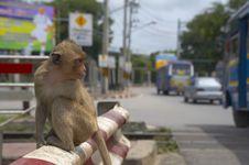 Monkey-27 Stock Photography