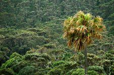 Free Tropics Stock Images - 1525914