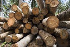 Free Coconut Tree Royalty Free Stock Photos - 1525978