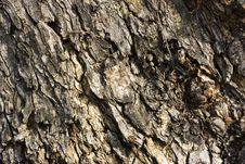 Free Tree Skin Texture Stock Photography - 1526002