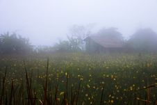 Free Foggy Countryside Stock Photography - 1526022