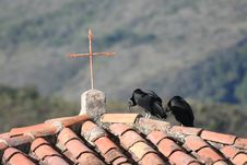 Black Vultures In Andes Stock Photography