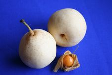 Free Nashi Pears From China Stock Photo - 1527980