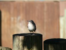 Free Bird On A Fence Royalty Free Stock Images - 1528739