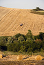 Free Fields Grain Royalty Free Stock Photography - 15200197