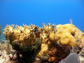 Free A Beautiful Coral Reef Scene Stock Photography - 15200812