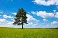 Free Alone Tree In Field Stock Image - 15207431