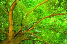 Free Tree From Below Stock Photography - 15200292