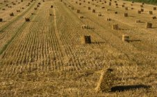 Free Hay Royalty Free Stock Image - 15201056