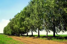 Free Country Road With Trees Stock Photo - 15201250