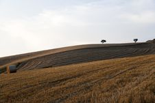 Free Threes And A Fields Grain With Bale Royalty Free Stock Photography - 15201267