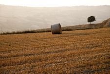 Free Tree And A Fields Grain With Bale Royalty Free Stock Photography - 15201307