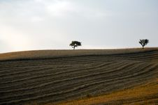Free Tree And A Fields Grain With Bale Royalty Free Stock Image - 15201336