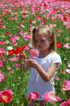 Free Girl In Poppies Royalty Free Stock Photography - 15202417
