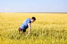 Free The Guy In A Wheaten Field Stock Image - 15205191