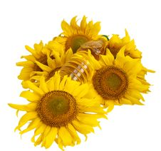 Sunflower Oil And Sunflower Stock Photos