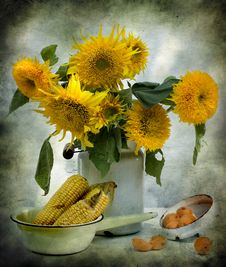 Free Still Life With Sunflowers And Corn Stock Photography - 15205682