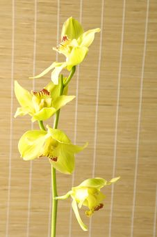 Free Yellow Orchid Stock Photo - 15206750