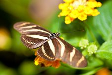 Free Beautiful Butterfly On A Small Yellow Flower Royalty Free Stock Images - 15207189