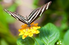 Free Beautiful Butterfly On A Small Yellow Flower Stock Photos - 15207203