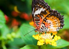 Free Beautiful Orange Butterfly Stock Photo - 15207220
