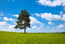 Free Alone Tree In Field Stock Image - 15207431