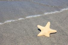 Free Sea Star Royalty Free Stock Images - 15208309