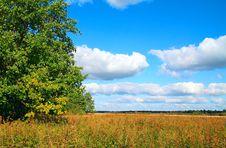 Free Oak On Field Royalty Free Stock Photography - 15208397