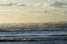 Free Ocean With Bird And Clouds Stock Photography - 15209612