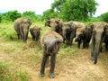 Free Speaking Elephant Stock Photography - 15213962
