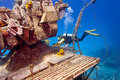 Free Exploring A Wreck Royalty Free Stock Photos - 15214828