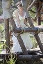 Free Bride On The Wooden Bridge Stock Photos - 15217163