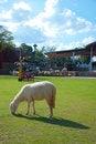 Free Sheep Stock Image - 15218451