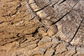 Free Bark And Wood Background Stock Photo - 15219470