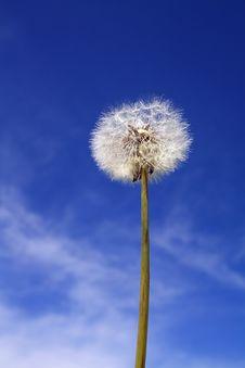 Free Dandelion Royalty Free Stock Image - 15210056