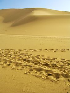 Free Foot Steps On The Dune Stock Images - 15210314