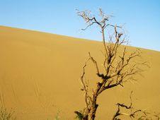 Tree And Dune Stock Photo
